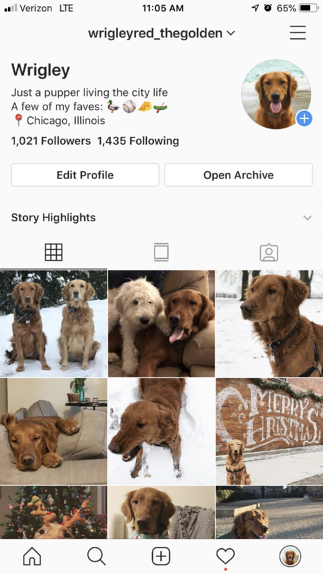 Dog instagram social media app example