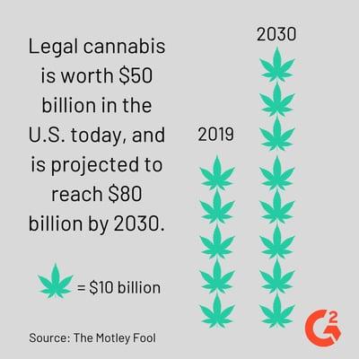 cannabis statistic
