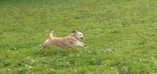 WFH-dog