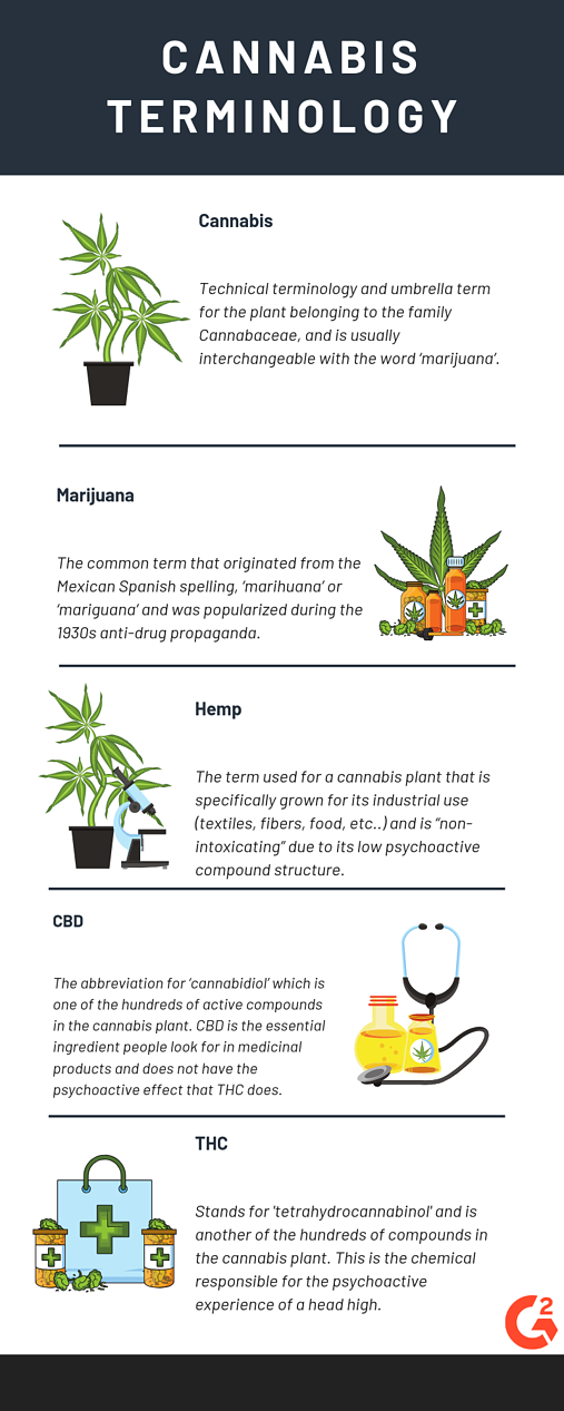 cannabis terminology