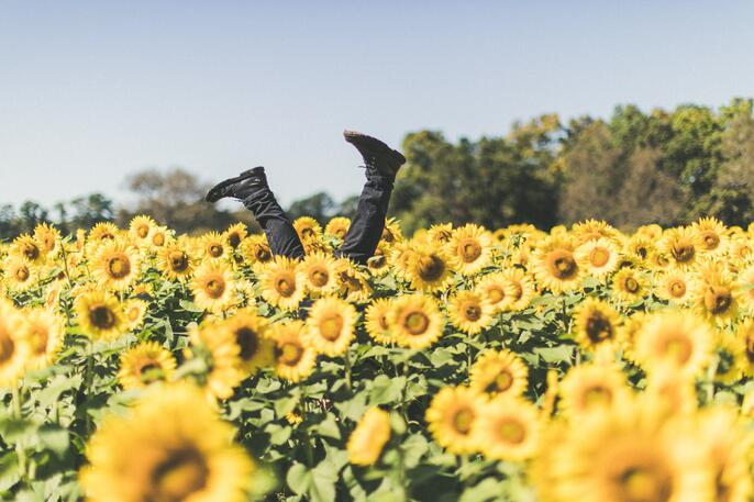 111 Happiness Quotes to Lift Your Spirits and Make you Smile
