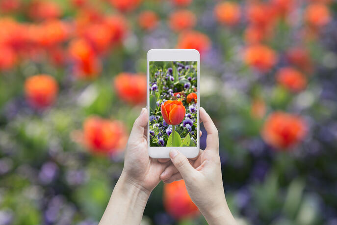 How to Use Portrait Mode on iPhone and Android